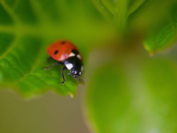 Ladybird, photography by Gijs Possel