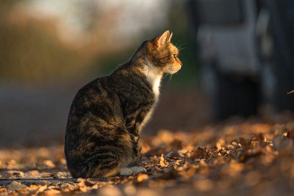 Cat, photography by Michał Skarbiński