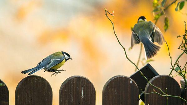 Birds, photography by Michał Skarbiński
