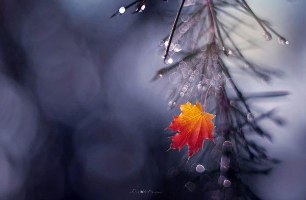 Photography by Lara Bonazza